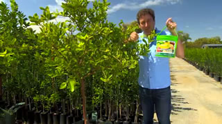 Growing the best citrus in the