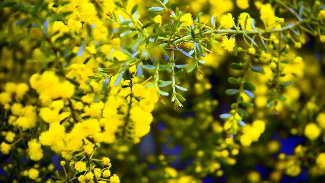 A Wattle for Every Situation