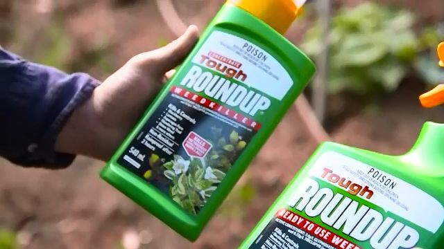 Tough Roundup Weed Killer