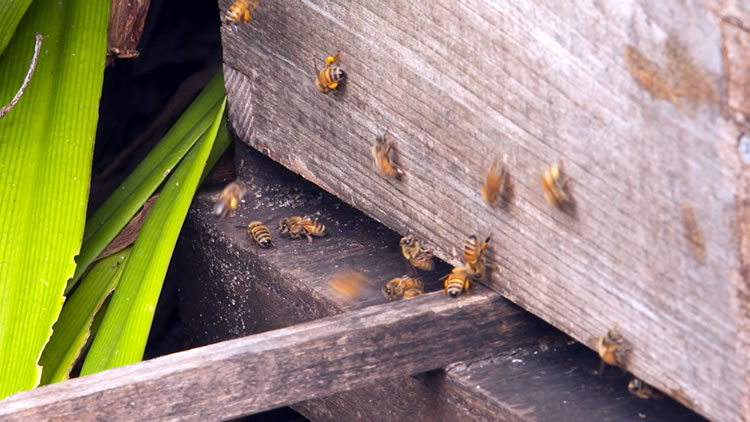 Hints and Tips: Beehives