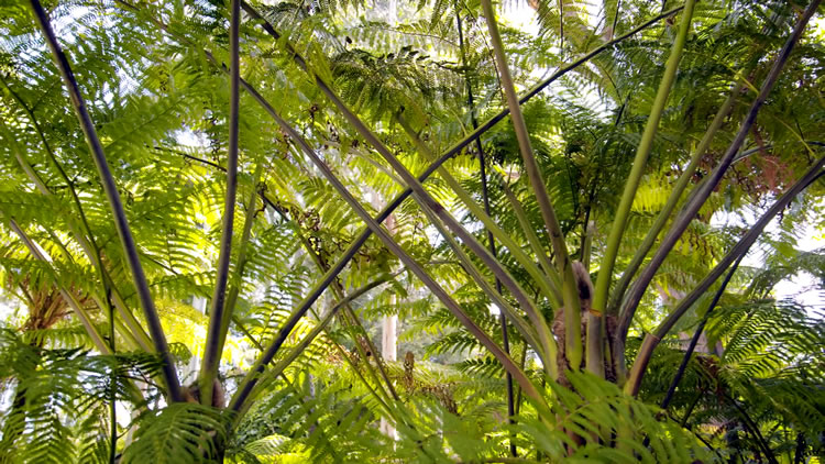 Plant Highlight ‐ Ferns