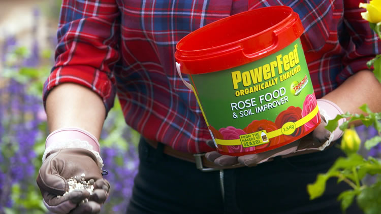 PowerFeeding Roses for Great R